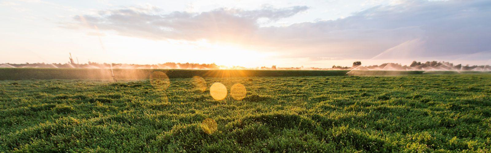 Dempze Cranberrry Sunrise Irrigation